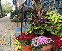 flower pots by stoop