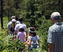 group of adults and kids hiking a trail at the albany pine bush preserve