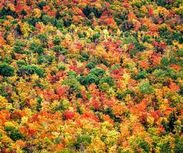 trees at peak foliage