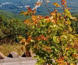 leaves in a tree on a mountain in fall