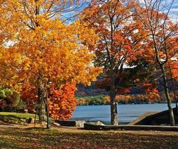 fall foliage on trees