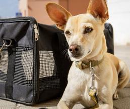 dog laying next to a bag