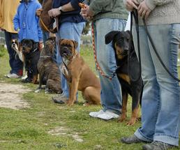 dogs and owners in an obedience class