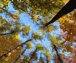 view looking up at foliage in trees