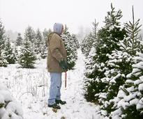 man about to cut christmas tree
