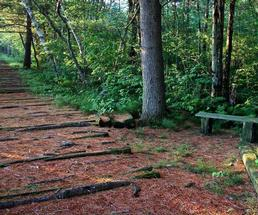 trail with bench