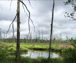 swampy area with trees