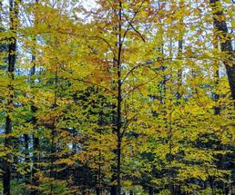 yellow foliage on tree