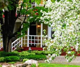 spring tree in front of bed and breakfast
