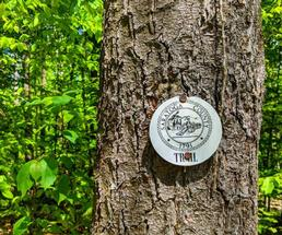 Saratoga County trailmarker on a tree