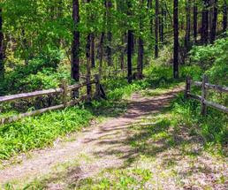fenced trail going into the woods