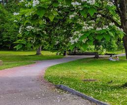 walking path under tree in park