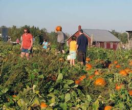 small group pumpkin picking