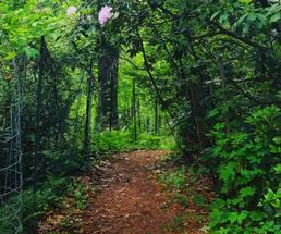 scenic nature trail