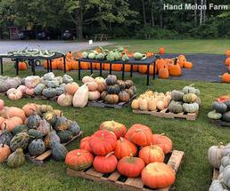 different types of gourds for sale at a farm