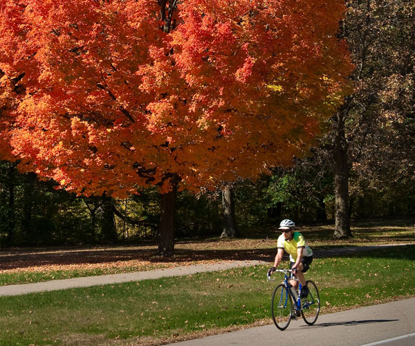 bike rider with foliage tree