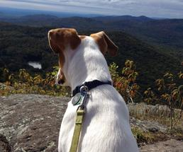 dog on top of a mountain