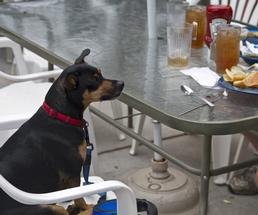 dog sitting at a table
