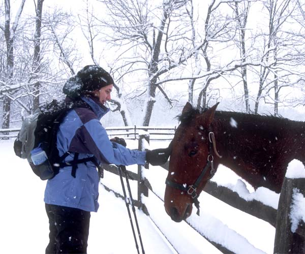 woman petting a horse in the snow