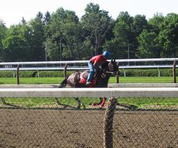horse working out at saratoga