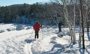 people cross-country skiing