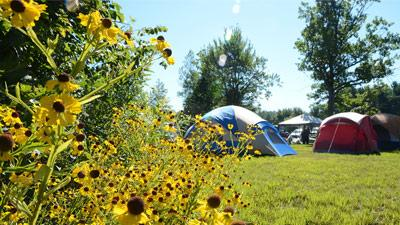 tents at a campground with flowers in the foreground