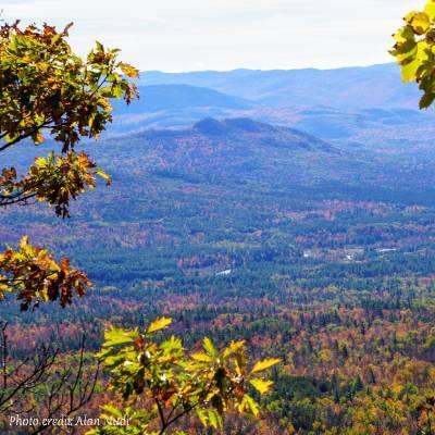 fall foliage on mountain