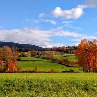 fall foliage on trees near field