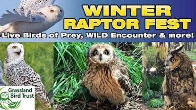winter raptor fest graphic with three photos of winter raptors