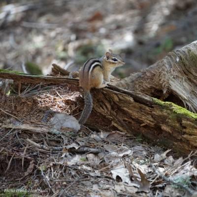 squirrel on a log