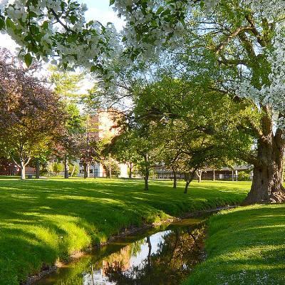 a lush green park
