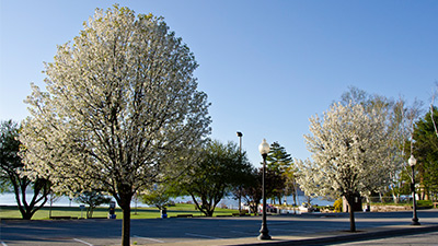 spring trees in front of lake george
