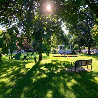park bench and gazebo with trees on a sunny day