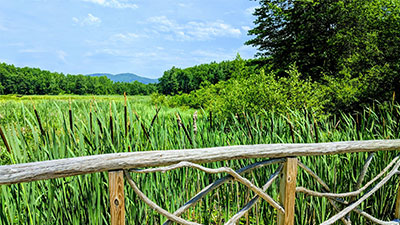 wooden railing with marsh area in the background