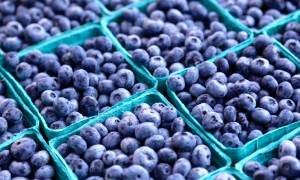 blueberries in containers