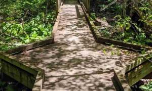 wooden platform in woods