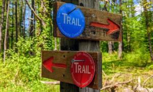 trailmarkers in woods