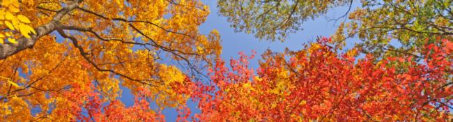 trees with bright colored leaves