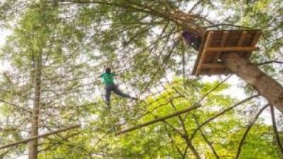 person climbing on treetop course, view from ground