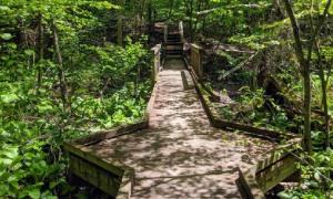 wooden walkway in the woods