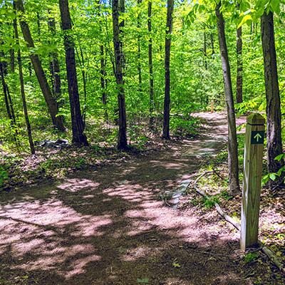 hiking trail in the 100 acre wood