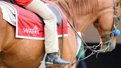 close up of Saratoga logo on a horse