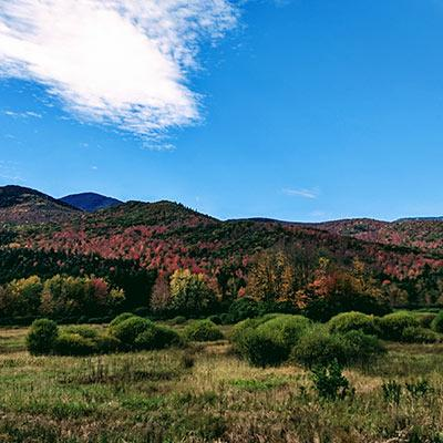 fall foliage on mountains in the distance
