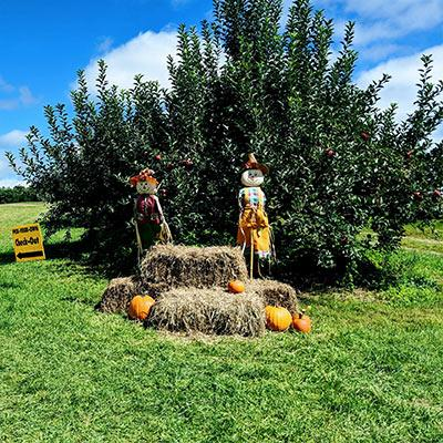 scarecrows and pumpkins in an apple orchard