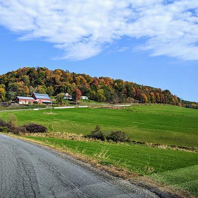fall foliage on a winding road