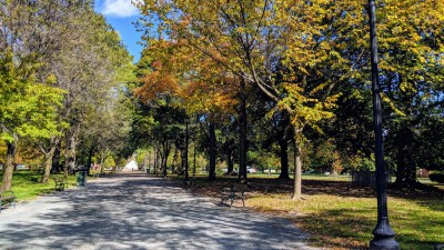 view of trees with orange leaves in a park