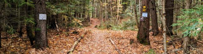 hiking trail with fallen leaves