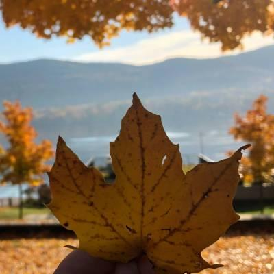 a leaf being held up against a fall background by a lake