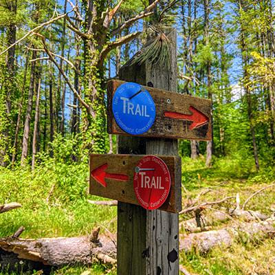 red and blue trail markers in the woods