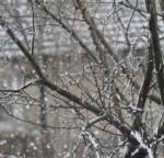 a bare tree with snow falling